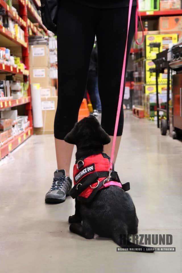 Assistance Dog